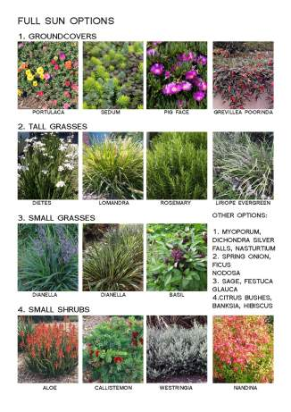 plants infographic_Page_1
