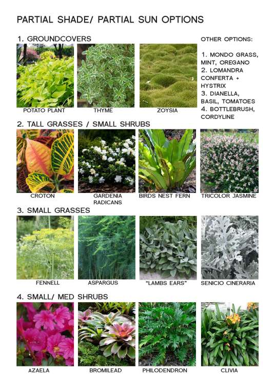 plants infographic_Page_2